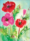 little jeanie birthday poppies