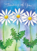 little jeanie white daisies on blue